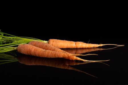 Group of three whole fresh orange carrot with greens isolated on black glass