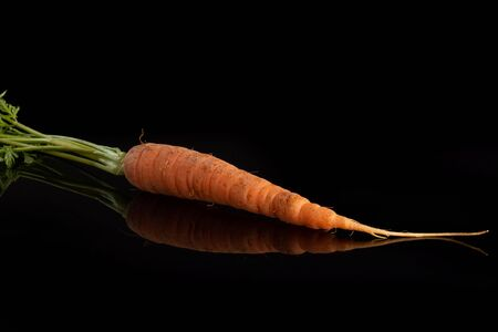 One whole fresh orange carrot with greens isolated on black glass