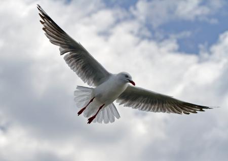 Seafull Flight