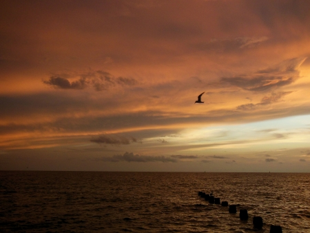Seagull flying over pilings at sunset in the Gulf of Mexico