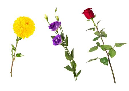 Foto für Beautiful floral set (vivid red rose, bright yellow chrysanthemum, purple eustoma on stems with green leaves). Flowers isolated on white background. Side view. Studio photo shoot. - Lizenzfreies Bild