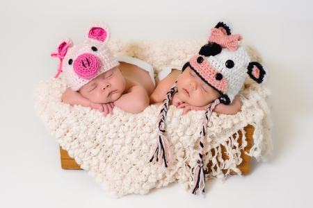 Foto de Sleeping fraternal twin newborn baby girls wearing crocheted pig and cow hats   - Imagen libre de derechos