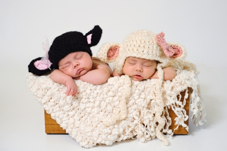 Photo for Sleeping fraternal twin newborn baby girls wearing crocheted black lamb and white lamb hats  - Royalty Free Image