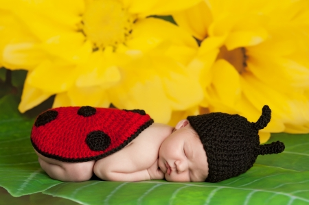 8 day old newborn girl wearing a black and red crocheted ladybug costume and sleeping on the leaf of a yellow flower