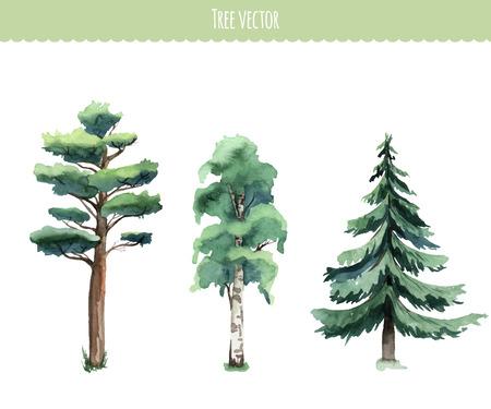 Illustration pour Set of watercolor trees. Birch, pine, fir-tree. Vector - image libre de droit