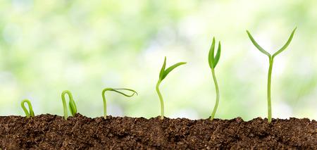 Photo pour Plants growing from soil - Plant progress - image libre de droit