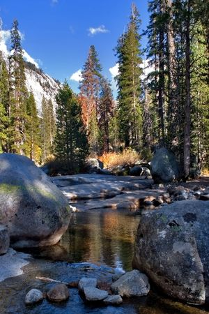 Shallow brook in a valley' surrounded by giant spruces
