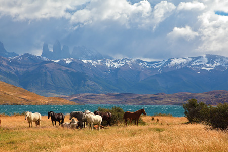 Chilean Andes. Fabulous lake Laguna Azul. In the distance visible rocks Torres del Paine. 