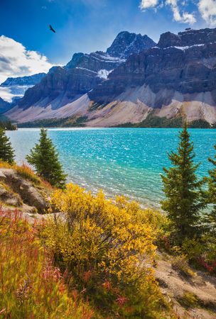 Photo pour Picturesque glacial Bow Lake with emerald green water. The lake is surrounded by pine trees. Banff National Park in the Canadian Rockies - image libre de droit