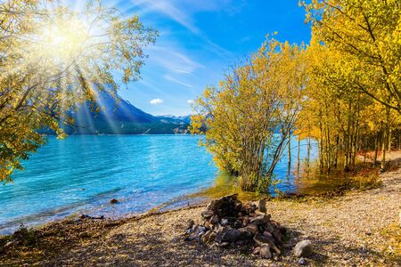 Photo pour Autumn sun warms the mountain valley. Rocky Mountains of Canada, autumn flood of artificial Abraham lake. The golden foliage of aspen and birches.Concept of active and photo tourism - image libre de droit