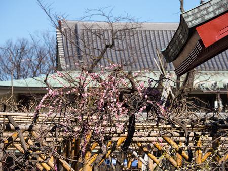 Kawamuralucy170201953