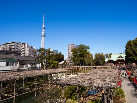 Kawamuralucy170201979