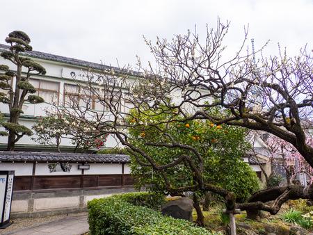 Kawamuralucy170201988