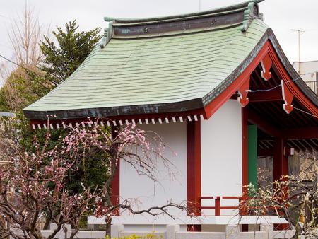 Kawamuralucy170201991