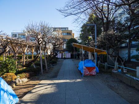 Kawamuralucy170202054
