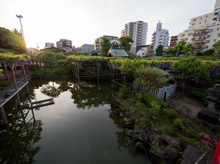 Kawamuralucy170500396