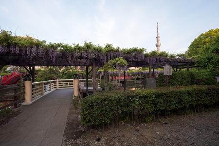Kawamuralucy170500399
