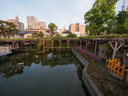 Kawamuralucy170500411