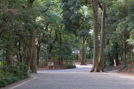 Kawamuralucy180606493