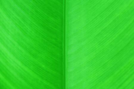 banana leaf green background