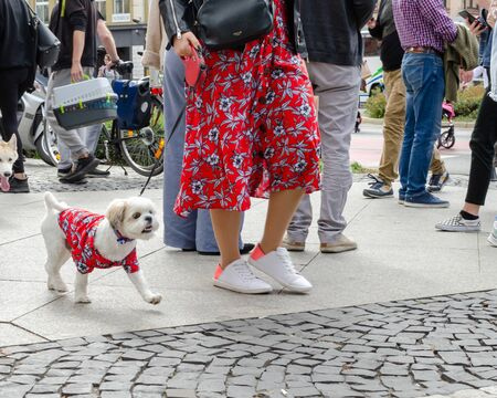 Photo pour Wroclaw, Poland - September 8 2019: Dog parade Hau are you? Maltese lapdog is walking on a leash in clothes of the same fabric as owners red skirt - image libre de droit
