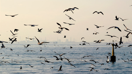 Photo for Flock of seagulls flying above the sea - Royalty Free Image