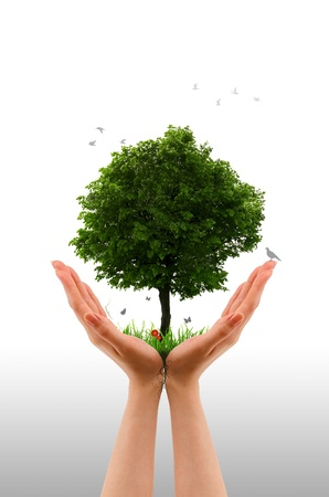 Photo for High resolution graphic of hands holding a tree.  - Royalty Free Image
