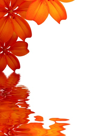 High resolution graphic of Flowers reflecting in water on white background.