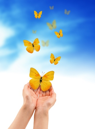 Hands holding a yellow butterfly isolated on cloud background.