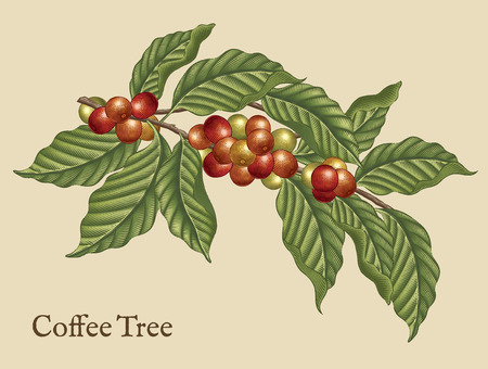 Illustration pour Coffee tree elements, retro coffee plants in etching shading style with color - image libre de droit
