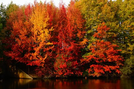 Photo pour A forest in autumn. The trees have beautiful colors. There is a gradient of green and yellow. Autumn is a pleasant season. - image libre de droit