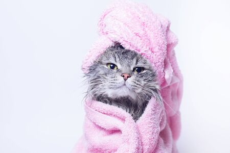 Photo pour Funny smiling wet gray tabby cute kitten after bath wrapped in pink towel. Pets and lifestyle concept. Head on gray background. - image libre de droit