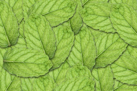 Mint Leaf Background