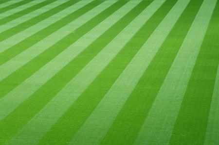 Football field with green grass