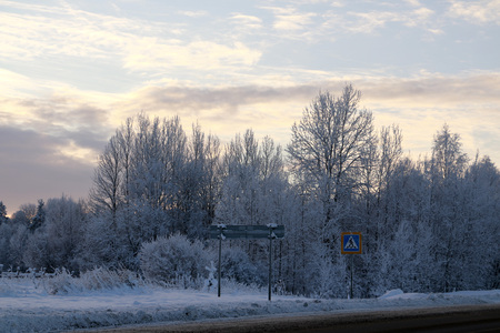 Photo pour Trees in cold winter day and snow - image libre de droit