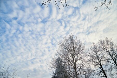 Naked branches of a tree against blue sky with white clouds