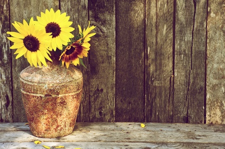 High contrast, vintage image of a rustic vase with beautiful sunflowers in the partial shade on a rustic, grunge background with copy space.