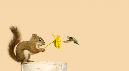 Greeting card design with a baby squirrel holding up a yellow flower for his little hummingbird friend to feed on, with copy space