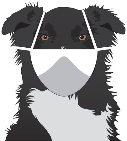 Illustration pour An Australian Shepherd is wearing a safety mask and looking at the viewer - image libre de droit