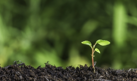 Close up of a young plant sprouting from the ground with green bokeh background