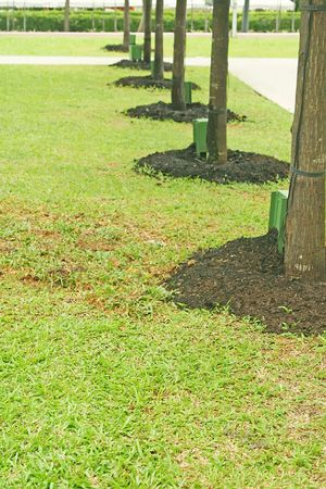 A column of newly planted trees for the environment.