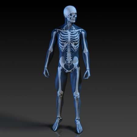 Human Body and Skeleton Anatomy Xray Concept