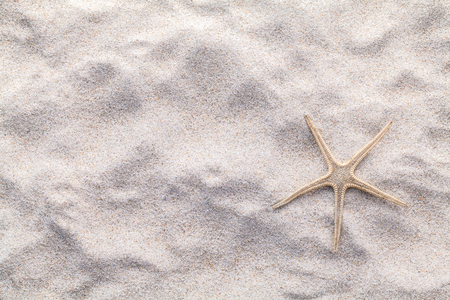 Foto de Sea shells,starfish and crab on beach sand for summer and beach concept. Studio shot beach background. - Imagen libre de derechos