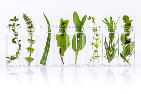 Foto de Bottle of essential oil with herb holy basil leaf, rosemary,oregano, sage,aloe vera and mint on white background. - Imagen libre de derechos