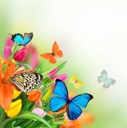 Spring flowers with exotic butterflies の写真素材