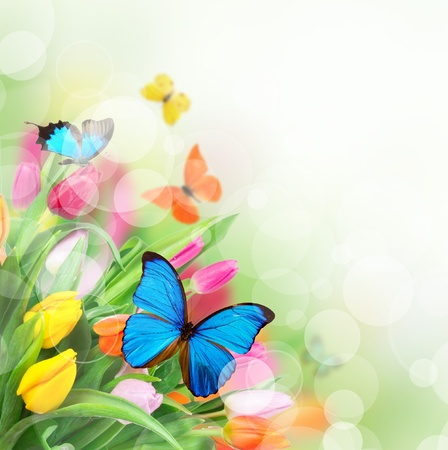 Spring Flowers With Exotic Butterflies Lizenzfreie Bilder Und Fotos