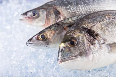 Photo pour Fresh sea fishes on crushed ice, close-up. - image libre de droit