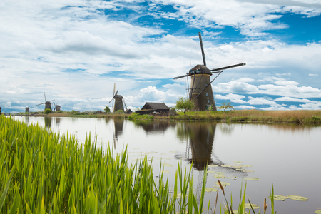 Lake vegetation with traditional wind mills. Holland