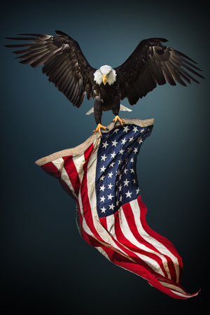 Photo pour Bald Eagle with American flag - image libre de droit