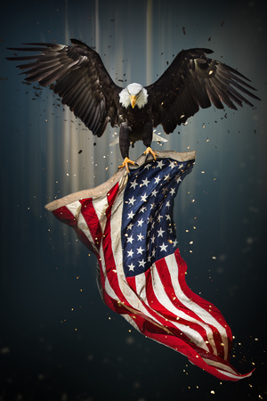 Foto de American Bald Eagle flying - symbol of america -with flag. United States of America patriotic symbols. - Imagen libre de derechos